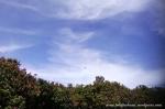 Gunung Gede Pangrango (20)